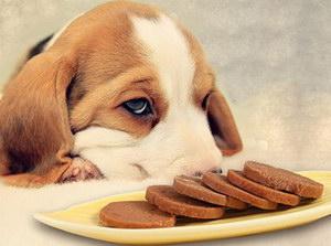 狗狗绝育后饮食注意要点