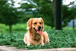 狗狗生产后怎么护理