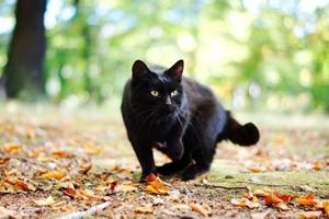 黑猫怎么养不变色